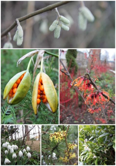 Winter 2014 in The Hidden Gardens