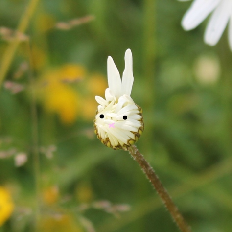 Wee bunny found in the Wildflower Meadow