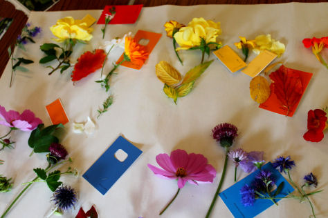 A colourful variety of flowers