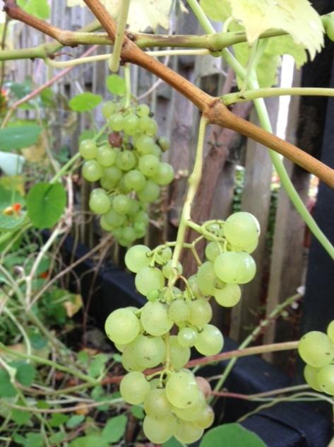 The Hidden Grapevines