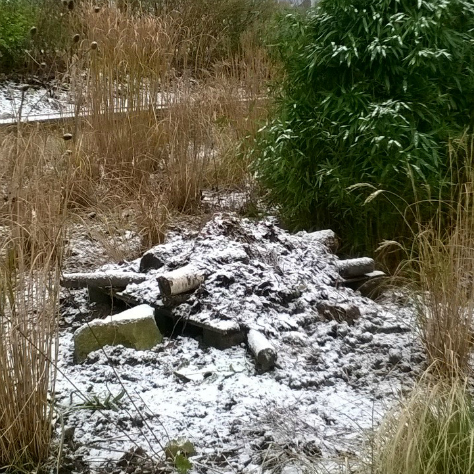 Hibernaculum II in our back meadow area, offering great views of the Glasgow Gurdwara