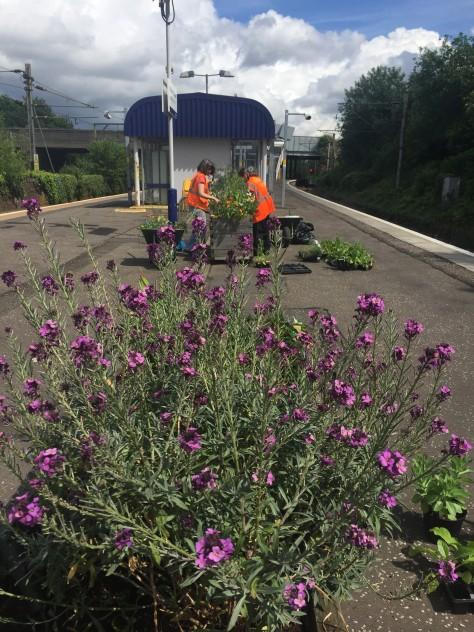 scotrail planters 5