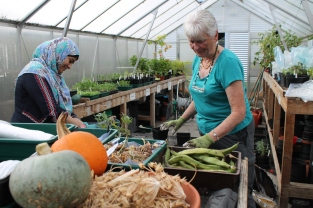 Volunteers working in the greenhouse